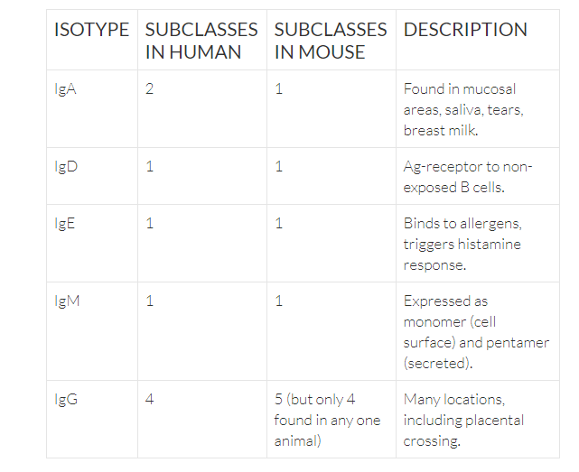 description of each isotype and subclasses in human and in mouse