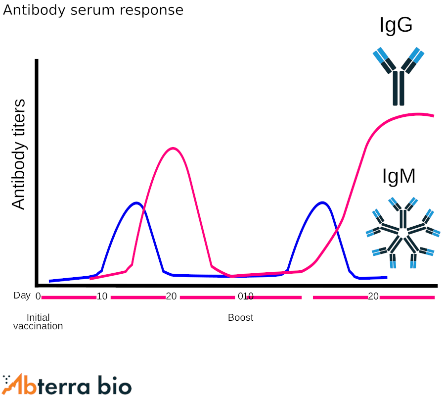 Antibody serum response to a series of boosts post initial vaccination