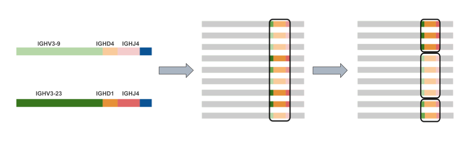 VDJ labeling, CDR3 identification and clone clustering of sequences