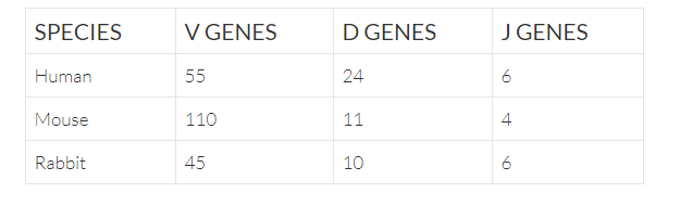 table showing the number of V D J genes in human, mouse and rabbit