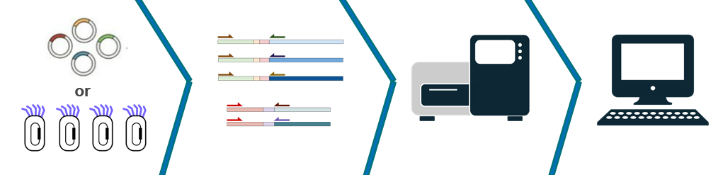 Reptor process for library sequencing
