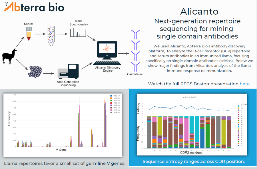 infographic of Alicanto's analysis of llama immune response to immunization